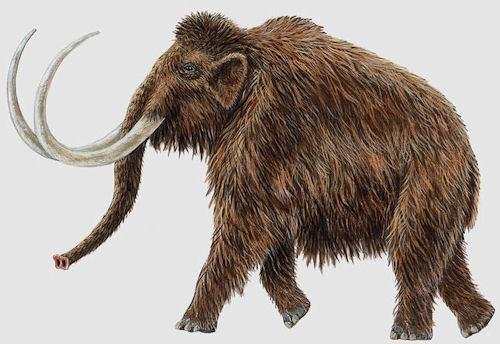 mamut-wlochaty