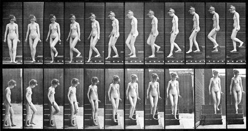 female_nude_motion_study_by_eadweard_muybridge_2
